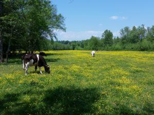 New Farm Listing