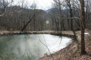 Affordably Priced Ten Acres