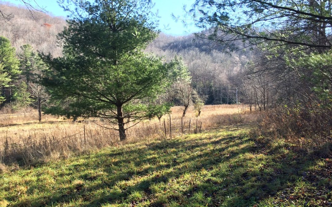 131 Acres Outside Black Mountain (Sold!)